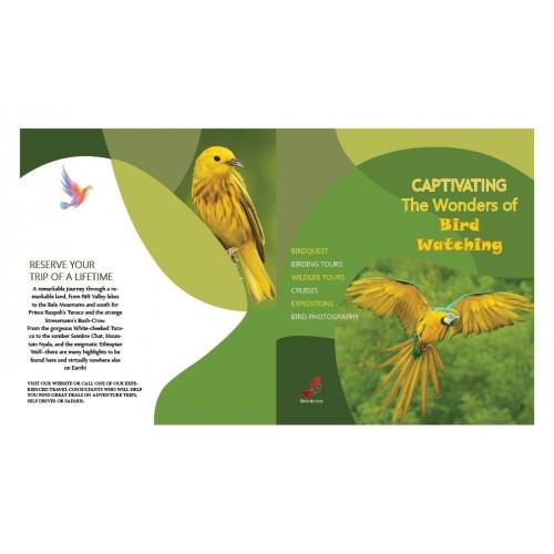 BirdWatch Portfolio